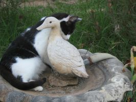 Ducks and cats by JustJusti