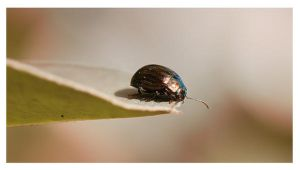 Little bug by Nataly1st