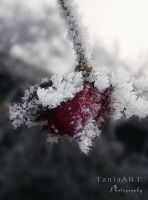 Frozen Heart by TaniaART