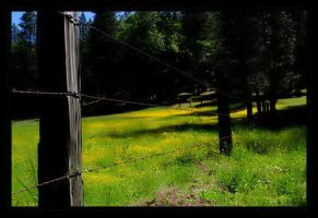 Fence by abstractlvr