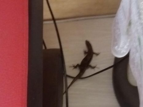 HOLY FUCK THERE'S A LIZARD IN MY ROOM by CashieCashew