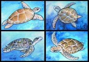 ATCs: Turtles by Athalour