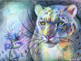 Big Cat Series 1 by OrcaOwl
