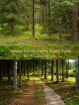 Forest Components Stock Pack by SilaynneStock