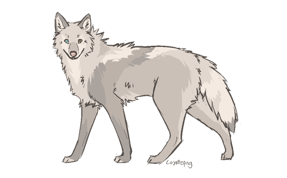 wolf OTA open by coIored