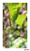 Droplet On Leaf by 121divided121