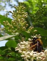 Little Bitty Pretty One by TheMarchStudios