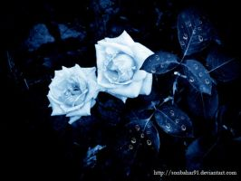 -bLue rOSe 2- by TuubArt