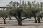 Old trees. by Carlosf93