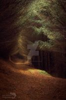 Enchanted forest by AngiWallace