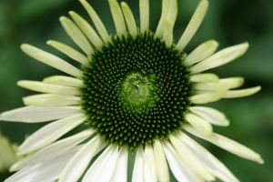 Green And White Flor by deadrose333