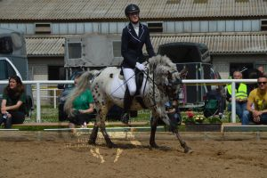 Pony dressage stock 6 by BRls-love-is-MY-Live