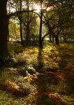 Woods of Galloway by scotto