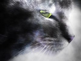 A Cats Eye by TheSpinxSage