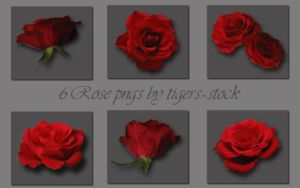066 Rose pngs by Tigers-stock