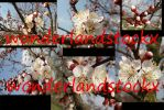 blossoming branches- 6 pictures 3648x2736 pixel by wonderlandstockX