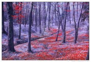 red leaves 01 by negromante