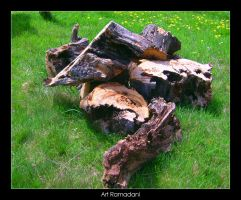 Old cutted tree by artti-ad