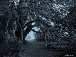 Moonlit Tree by Estruda