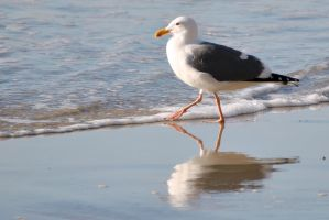 Seagull in step by fosspathei