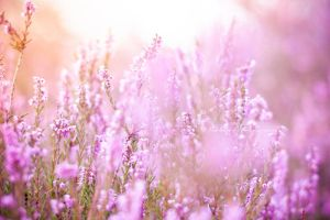 Colorful pink by Pamba