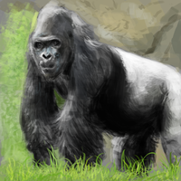 gorillaaaa sketch by lamedecaying