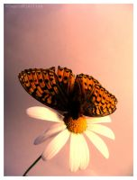 the butterfly effect by accessQ
