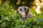 On the Wall, On the Lookout by Partridge-PetPics