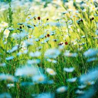 meadow XX by indojo