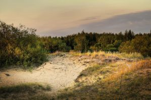 Gold of the Dunes by Avestra