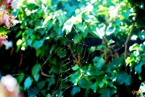 Web Spider by Bonfire22