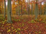 Red Woods 9658719 by StockProject1