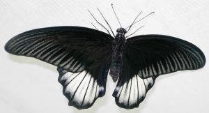 396 - butterfly by WolfC-Stock