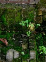 Green 2 by HSM-Version-42a