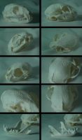 Cat skull 2 by grygon