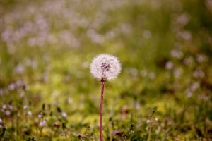 Make a Wish **STOCK IMAGE** by AKayPhotography