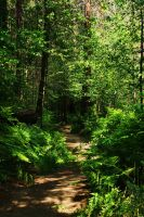 Forest path in Yosemite by galleleo