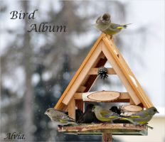 Bird Album 2011 by Alvia