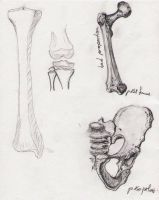 Bone Studies 01 by BlackDelphin