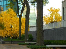 Fall Downtown Hartford 4 by toxicsoil