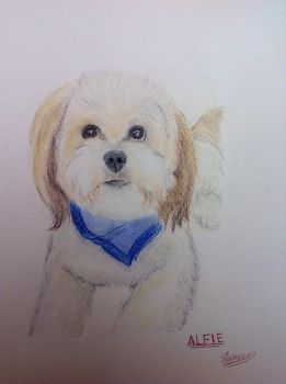 A commission for my friend of her dog Alfie by MissVengence