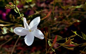 White Flower by silence2