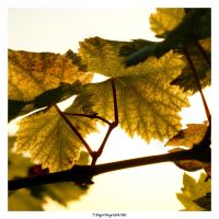 With Nature, We Make Wine by TaNgeriNegreeN1986
