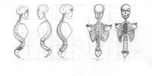 Human Figure Studies - Chest and Spine 2 by CiNiTriQs