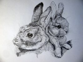 Rabbits by chrisravensar
