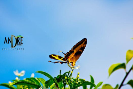 ButterFly by AndredesignZ