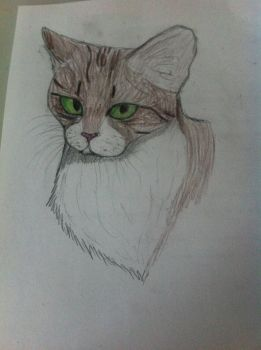 .:WC:. Bright Stream by Fireblaze625