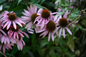 view to echinacea 3 by ingeline-art