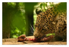 Enjoy your meal II. by Ciril