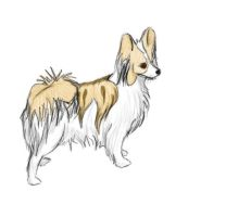 Lemon and brown Papillion by RSmales